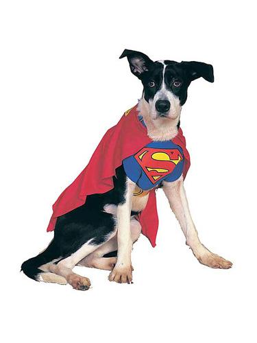 Superman Hundekostüm für Hunde